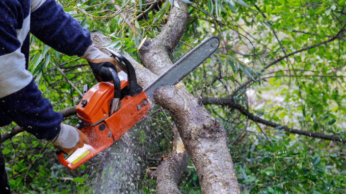 élaguer son arbre