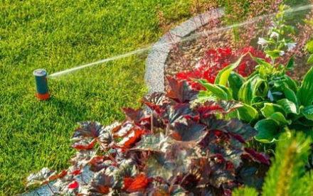 Fréquence d'arrosage de sa pelouse