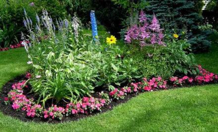 Entretenir une platte bande de fleurs