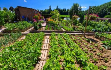 Comment faire un jardin potager naturel