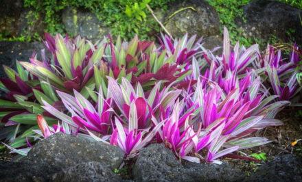 Livres références sur le jardin tropical