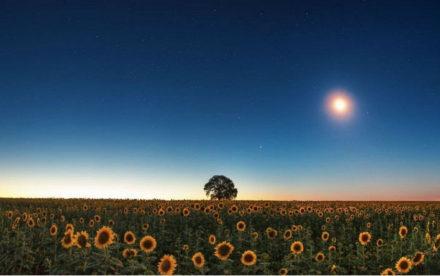Jardiner avec la lune