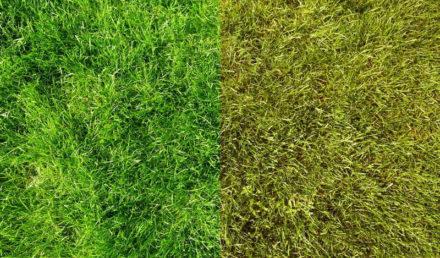 Comment rénover une pelouse