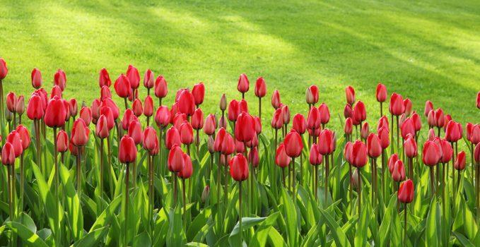 belle pelouse avec fleurs