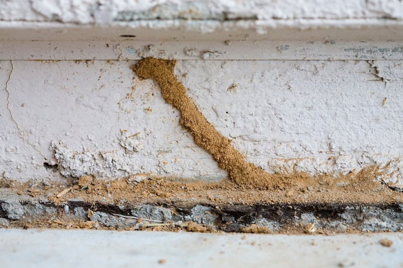 Comment identifier les termites