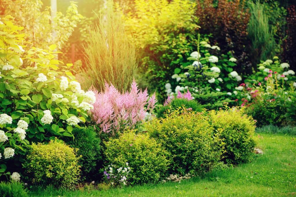 végétaux jardin