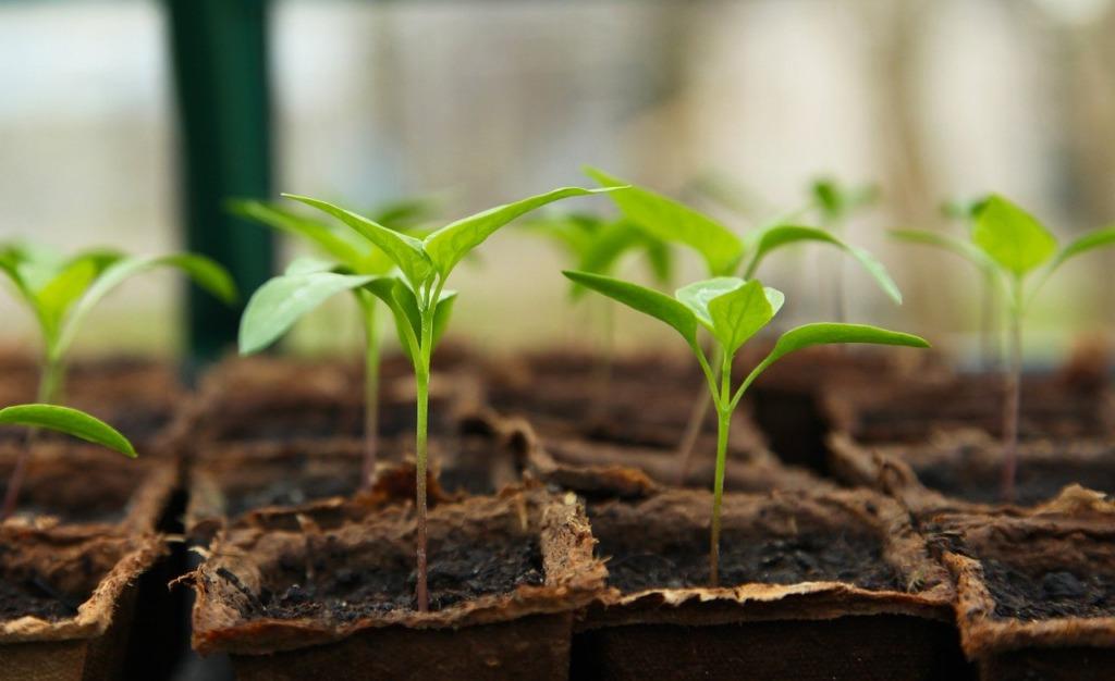passion pour jardinage