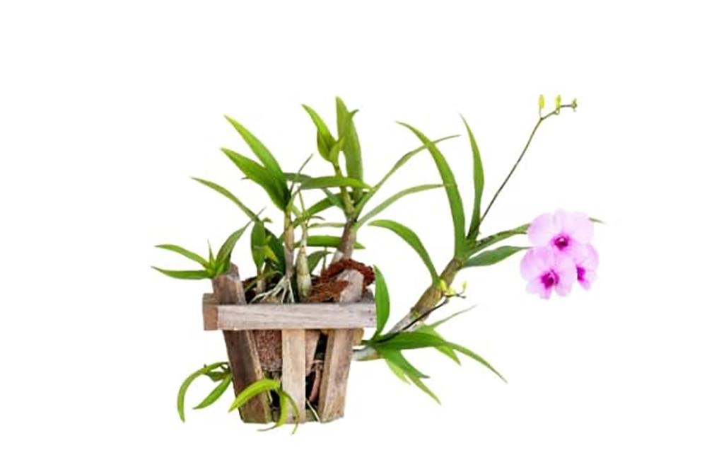 pot en bois pour orchidée