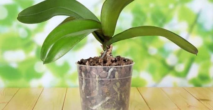 pot en plastique transparent pour orchidée