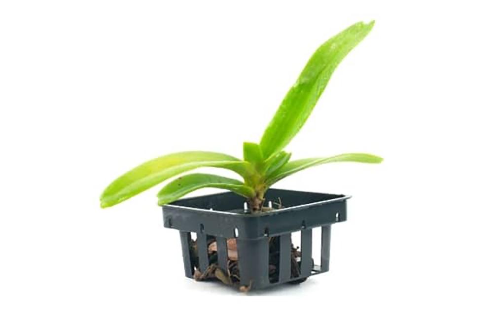 pot panier pour orchidée